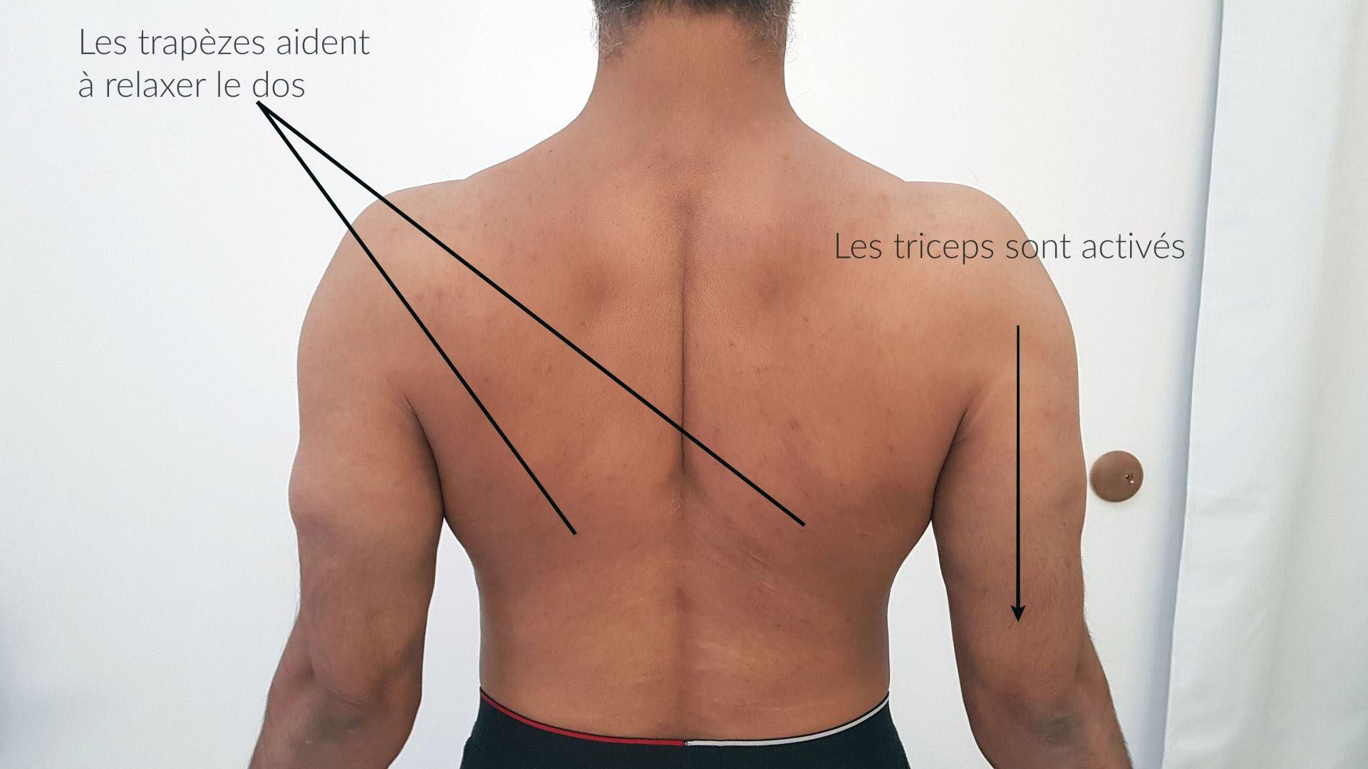 Activation du dos et triceps